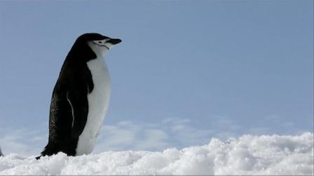 《走进美国》南极洲海冰不明所以大量消失