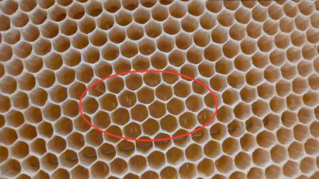 米哥实例讲解什么是蜜蜂工产及工蜂产卵后的处理方法(下)