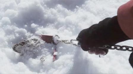 男子把八条狗拴在南极,半年后再回去,拉开铁链激动不已