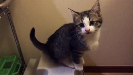 这窝小奶猫看上洗手盆,左瞧右瞧,认真的模样太可爱了