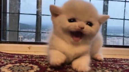 萌宠:当小奶猫生起气来, 看起来奶凶奶凶的呢