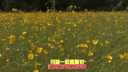 分享徐小凤的经典歌曲《风雨同路》,音律独特,真棒