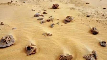 """沙漠旅行,为啥看到""""石头""""要捡起,究竟有何猫腻?游客:我又不傻"""