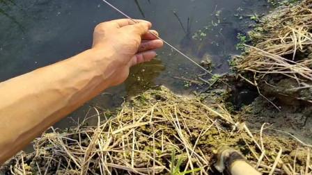 小哥钓鳝鱼,没准备就脱钩了,下一分钟还继续吃钩子