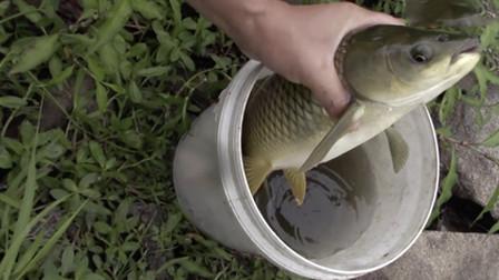 朝天钩挂蚯蚓也能钓到草鱼 真是头一次玩