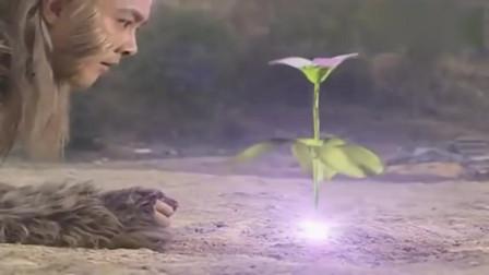 孙悟空放弃斗战胜佛,化身石头守护紫兰花,童年回忆啊