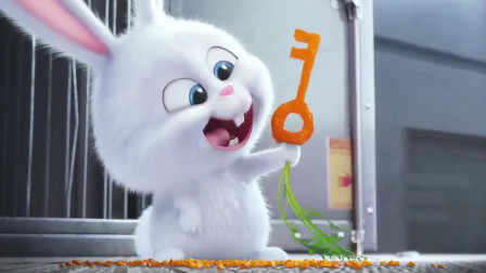 爱宠大机密:兔老大真是厉害,用胡萝卜啃出了一把钥匙