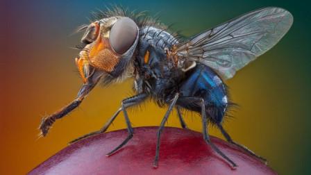 如果是论对地球的贡献,苍蝇绝对比你大!你还讨厌苍蝇吗?