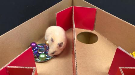 仓鼠在立体迷宫里面顺利通关,好灵活的样子