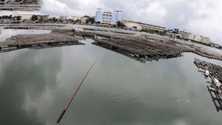港口前打钓鱼 黑格鱼竹梭鱼 是个好钓点
