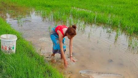 家里没肉吃了,农村女孩提着水桶去田里抓鱼,看看她抓了多少?
