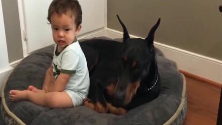 宝宝是家里的霸王,狗子都绕道走,网友:小心被咬