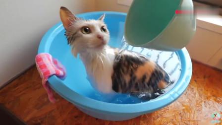 爱洗澡的猫咪,自己爬进澡盆里,这不符合常理啊!