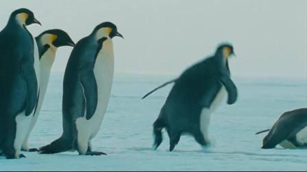帝企鹅日记:天气好了,大家一起来滑一滑