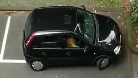 女司机侧方停车,半箱油都没了还没停好,真是令人哭笑不得