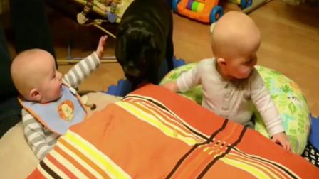 狗狗爱小主人,把宝宝逗得哈哈大笑,有爱!