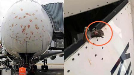 客机法国降落时遭群鸟撞击 机头布满红色血点