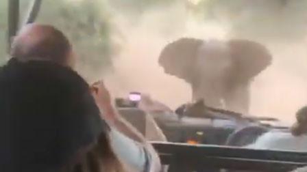 旅游车突遭野象疯狂追逐冲撞 全车人竟淡定拍下惊险瞬间