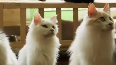 行者 2019 TV版 一个书生 一个书店 四十多只猫咪的故事