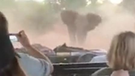 大象发怒路上疯狂冲撞游客车 游客全程淡定拍下惊险瞬间