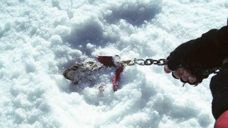 男子将8条狗锁在南极,过了180天再回去,拉起铁链后激动不已!