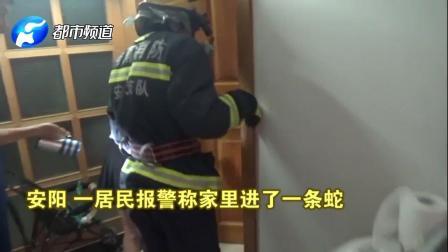 """卧室进了个""""活物"""",到处乱游!女子慌张打119,消防员一看笑了"""
