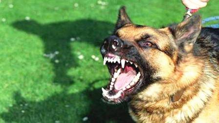 """为何狗舔过""""人血""""后,必须要当场杀掉它?原来还有这种说法"""