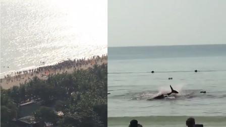 三亚海滩出现鲨鱼咬人视频被疯传?网警辟谣:受伤鲸鱼搁浅