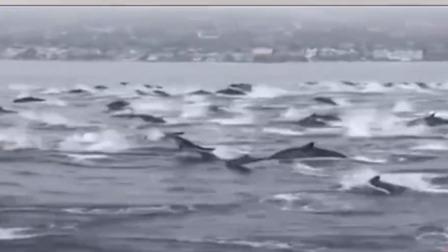 海上神奇画面 数百海豚与男子同游 每日新闻报 20190717 高清版
