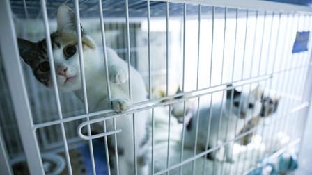 喵星人地下城守护者尹奕:一只单身狗和100只流浪猫的故事