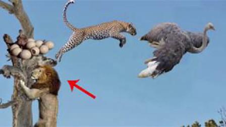 飞禽与走兽的实力对战,究竟谁能更胜一筹?