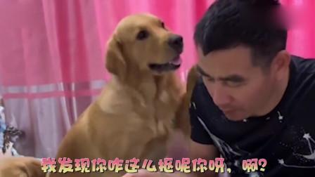 小狗想吃面包,主人却喂它吃辣椒,狗妈妈发现后,气的要揍主人