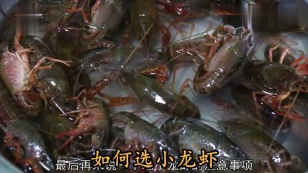 """大厨教你一道""""如何选小龙虾""""家常做法,买选红虾还是青虾?养殖户说出大实话"""