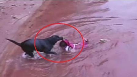狗狗对玩水小朋友强迫救援被指关爱过度