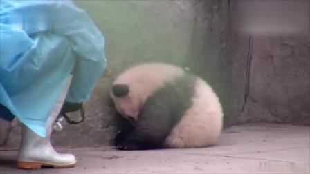 不要再拍了!我害羞,熊猫:今天黑眼圈太重,不给拍!