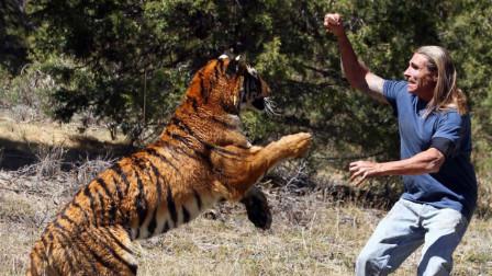 主人为测试老虎忠诚度,将手胳膊让老虎添血,结果下一秒意外发生