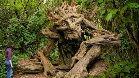 """地球最""""可怕""""的一棵树,4000年来食人无数,进食方式十分的独特"""