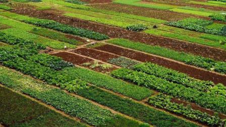种植蔬菜小技巧,轻松杀灭地下害虫,还不怕农药残留
