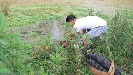 阿新信心满满拿10个笼子往稻田里捕黄鳝,一夜的收获却让人很失望