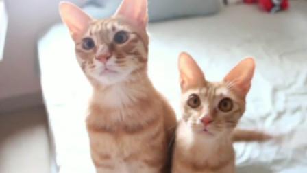 被幾只橘貓這么盯著看,總感覺自己要拿點吃的喂它們呢