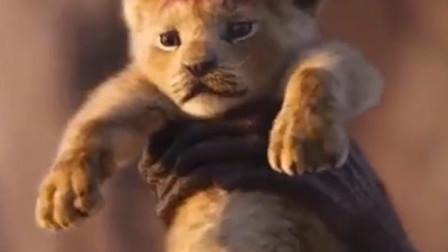 狮子王:老狮王木法沙教导小辛巴:记住你是谁,你是真正的国王