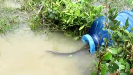 熊孩子用水桶自制旋风捕鱼机,鱼儿只要一靠近,就会被吸溜进去!