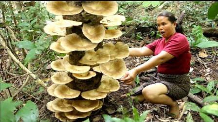 发现了鲜美的蘑菇,那就这样炸着吃,一起来品尝原汁原味的美味吧