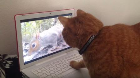 明明看见屏幕里有只小松鼠下一秒它却不见了