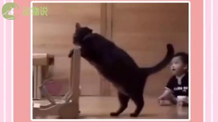 猫咪:为这个家付出的太多了
