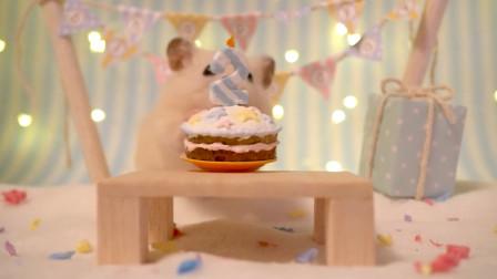 小姐姐制作小蛋糕,给小仓鼠过生日,这也太可爱了