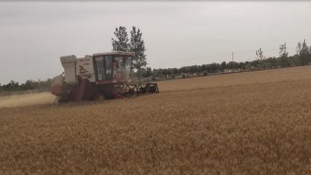 实拍河南唐河收小麦,收割机已经下地,河南老乡你们该回来了