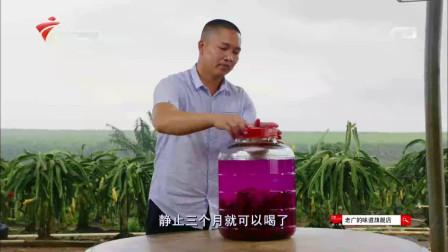 """""""万物皆可泡""""果农用红肉火龙果泡酒 好似鸡尾酒"""
