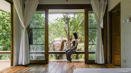 她从纽约搬到泰国丛林6年:原始生活能让人停止攀比,真正享受人生