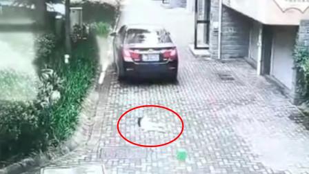 奶奶转身丢垃圾 3岁女童蹲地玩耍遭车碾压重伤
